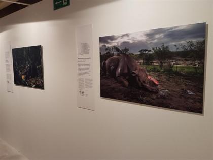 'Wildlife Photographer of the Year' llega a Madrid por tercer año
