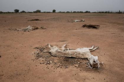 La crisis climática podría dejar a más de 25 millones de niños desnutridos en 2050